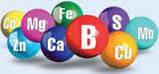 Подкормка бобовых и свеклы хелатными удобрениями РЕАКОМ ХЕЛАТ БОРА+МОЛИБДЕН B 100, Mo 10. Корректор дефицита, фото 3