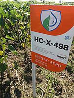Купить семена подсолнуха под гранстар НСХ 498 , Высокоурожайный масличный гибрид Сумо. Экстра Фракция