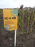 Подсолнечник НСХ 498 под гранстар, Купить устойчивый к засухе и заразихе гибрид для Юга Украины., фото 5