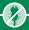 Гербицид МИЛАФУРОН никосульфурон 40 г/л аналог Милагро, НЕРТУС / ВЕНГРИЯ , фото 3