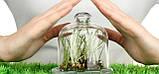 Гумат Калия Натрия для Бобовых. Биокомплекс для листовой подкормки Сои Гороха Нута., фото 5