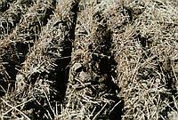 Биодеструктор Стерни для Гречихи, Льна. Био-Минералис разложения растительных остатков на поле в гумус.