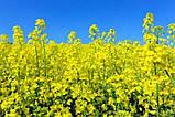 Стимулятор Роста для обработки семян Озимого Рапса АКТИВНЫЙ СТАРТ  гуматы, Аминокислотами, фото 5