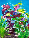 Стимулятор Роста для листовой подкормки Подсолнечника. АКТИВНЫЙ СТАРТ. Хелаты Гуматы Аминокислотами, фото 5