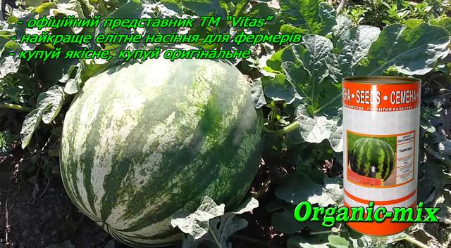 Семена арбуза Талисман