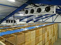 Холодильные камеры для хранения овощей и фруктов
