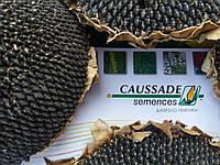 Семена подсолнечника МОНРОВИЯ Коссад Семанс, А-Е, 104-110 дней, Высокоурожайный, Франция, 2017г.
