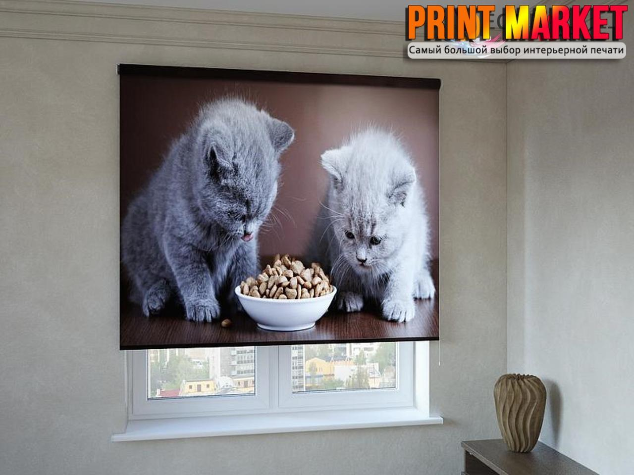 Рулонные шторы с фотопечатью котята