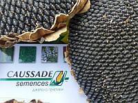 Нові гібриди соняшнику МОНРОВІЯ КС, А-Е, 104-110 днів, Високоврожайний. Коссад Семанс Франція