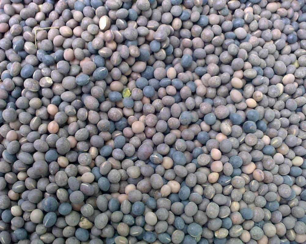 Кормовая трава Вика Яра - 1 кг