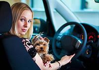 Обязательное страхование водителей