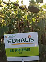 Семена подсолнечника ЕС АРТІМІС (Евро-лайтинг)
