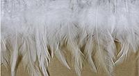 Перьевая тесьма из перьев петуха.Цвет белый.Цена за 0,5м