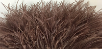 Перьевая тесьма из перьев страуса .Цвет коричневый.Цена за 0,5м