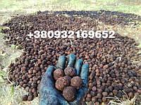 Американский Черный орех / Чорний горіх / Black Walnut