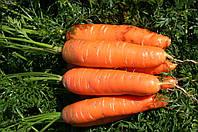 Семена Моркови Нантская Сладкая, (Германия), 0,5кг
