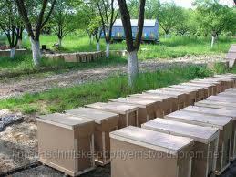 Бджолопакети українська степова порода
