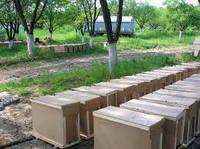Пчелопакеты украинская степная порода