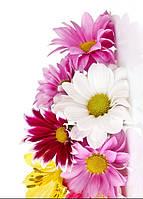 """Настенный обогреватель-картина Shine """"Хризантемы"""" 84x60 см."""