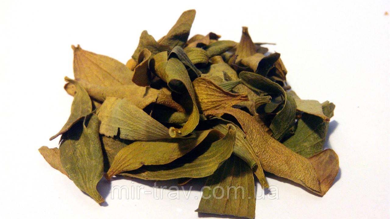 Омела белая листья 100 грамм