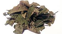 Грецкий орех листья 100 грамм