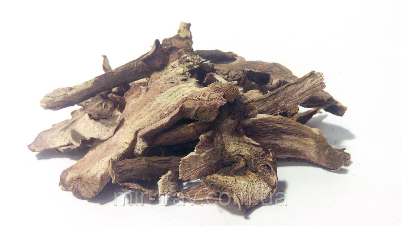 Пион уклоняющийся корень (марьин корень)