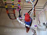 Іграшка-гойдалка для птахів.(Спіраль велика), фото 2