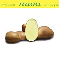 Бернадетта насіннєва картопля округло-овальна рання 3 репродукція 20 кг