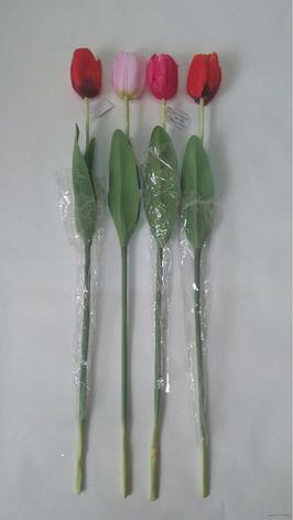 Тюльпан, фото 2