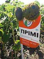 Подсолнечник под Евролайтинг ПРИМИ, Семена засухоустойчивые. Высокоурожайный гибрид подсолнечника., фото 1