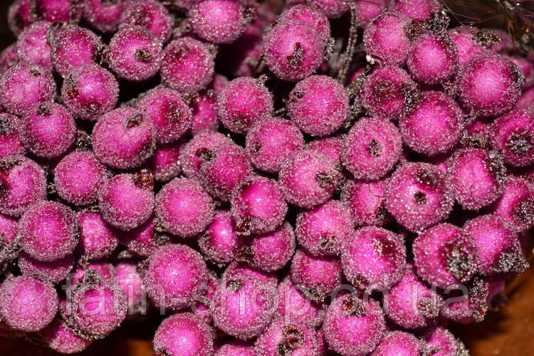 Калина цукрова декоративна 12мм - малиновий колір