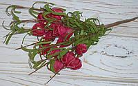Кустик физалиса фоам вишневого мелкого, фото 1