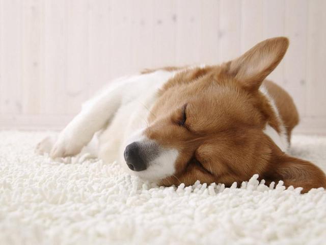 Ferplast SOFA' Лежанка мягкое место для собак