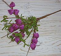 Кустик физалиса фоам фиолетового мелкого, фото 1