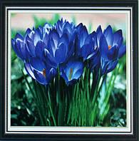 Алмазная техника Бриллиантовые ручки Перші квіти (GU_198918) 25 х 25 см