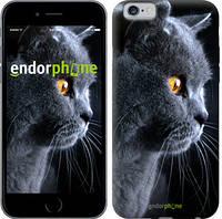 """Чехол на iPhone 6 Красивый кот """"3038c-45-4848"""""""