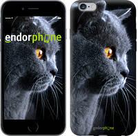 """Чехол на iPhone 6 Plus Красивый кот """"3038c-48-4848"""""""