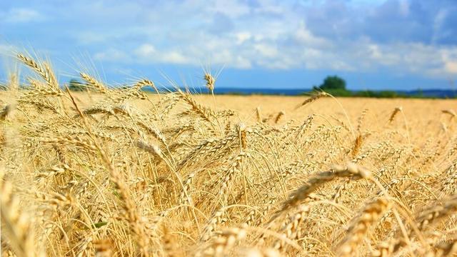Применение удобрений в условиях засушливого климата - Реаком