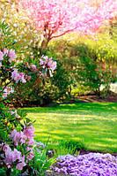 Газон, цветы, цветущее дерево