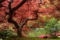 Осенне дерево, озеро