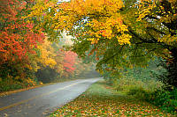 Деревья над дорогой