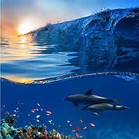 Дельфины и море