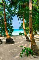 Роща пальм на пляже