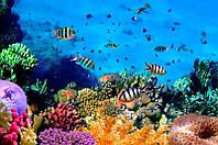Подводный мир. Красоты.