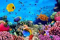 Мир подводный. Красоты.