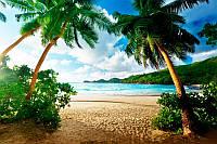 Пляж и пальмы