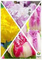 """Смесь тюльпанов """"Красота спасет мир"""" 36шт"""