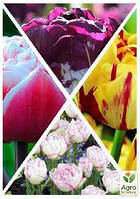 """Смесь тюльпанов """"Воздушный поцелуй"""" 36шт"""