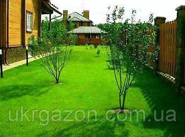 Посухостійкий газон  10 кг, Урожай 2019