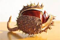 Сушеные плоды Конского каштана